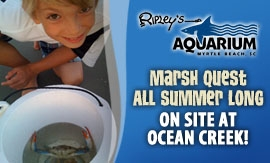 Ripley's Marsh Quest CLICK FOR DETAILS